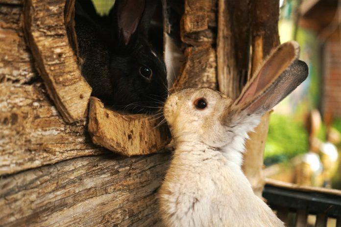 konijnenhok